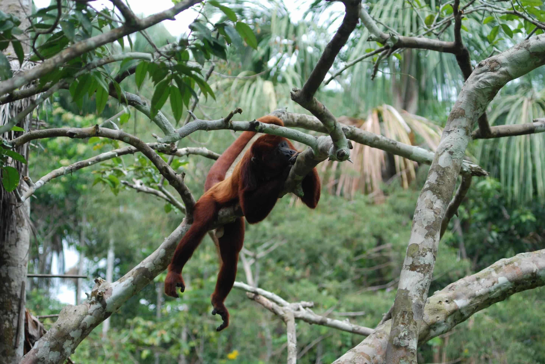 singe forêt tropical